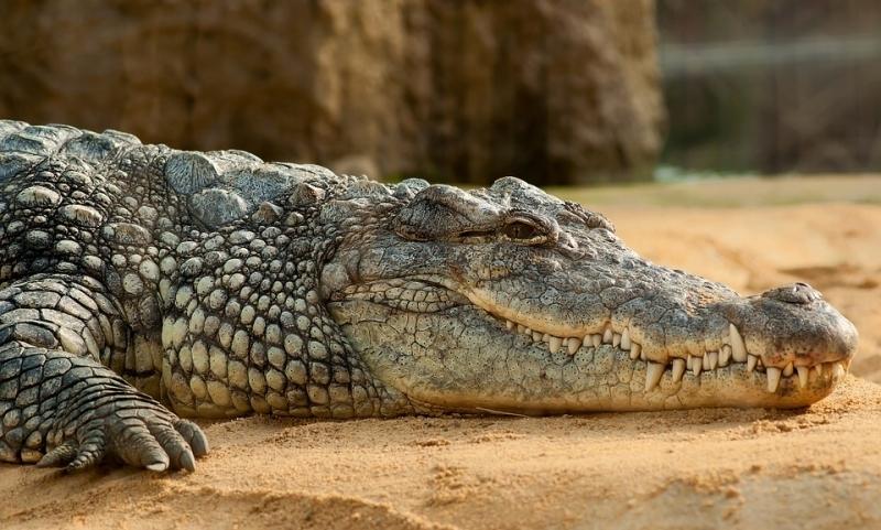 Мумию гигантского крокодила божественного происхождения нашли в Египте
