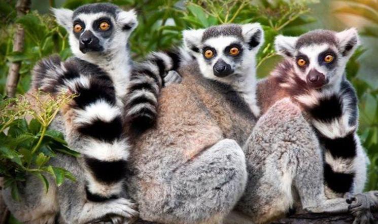 Животные острова Мадагаскар