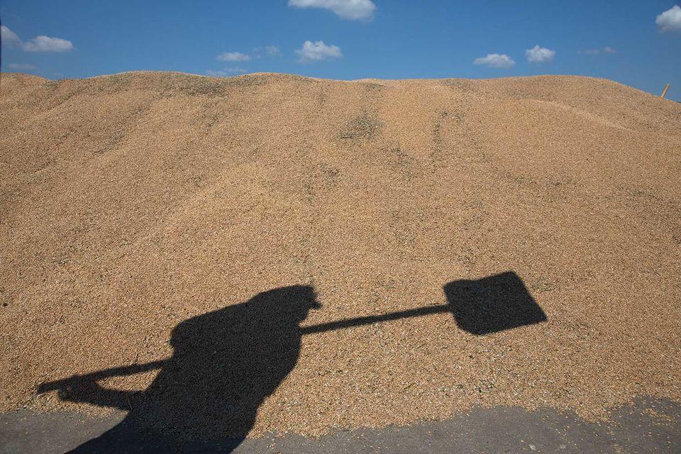 Россия становится великой сельскохозяйственной державой