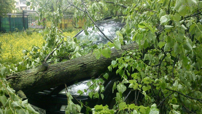 Непогода оставила без электричества тысячи человек в 35 населенных пунктах РФ