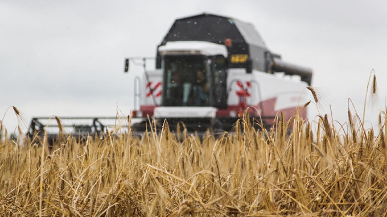Россия поставит Сирии 3 млн тонн пшеницы за три года
