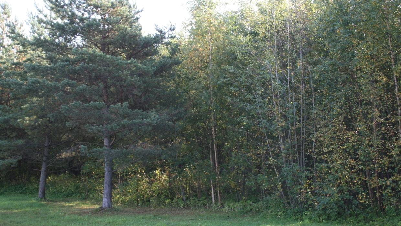 Пропавшего две недели назад охотника разыскивают в лесах Сосногорска