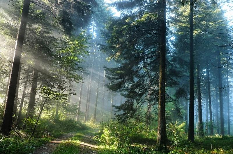 леса в Европе