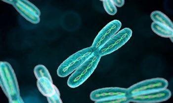 Молекулы ДНК и количество хромосом — схема митоза и мейоза