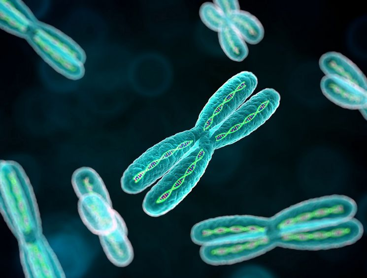 Молекулы ДНК и количество хромосом