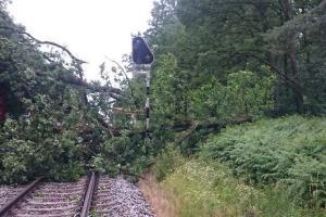 В Польше по время шторма дерево убило заместителя мэра города