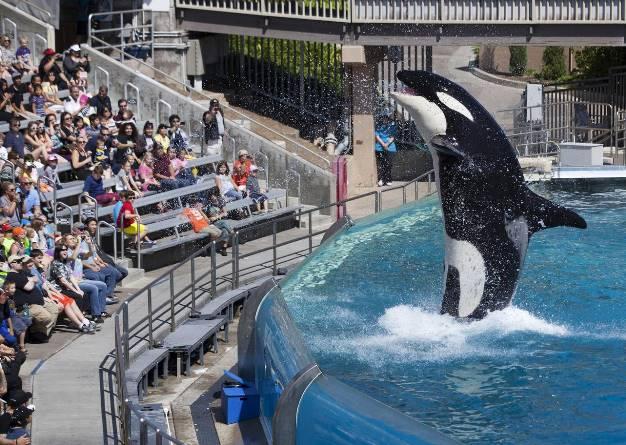 Китай строит десятки новых океанариумов, где в ужасных условиях содержатся киты и дельфины