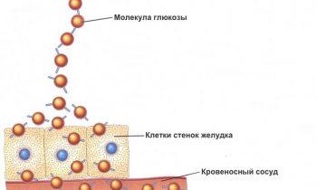 Химические вещества в пище и их роль в метаболизме организма