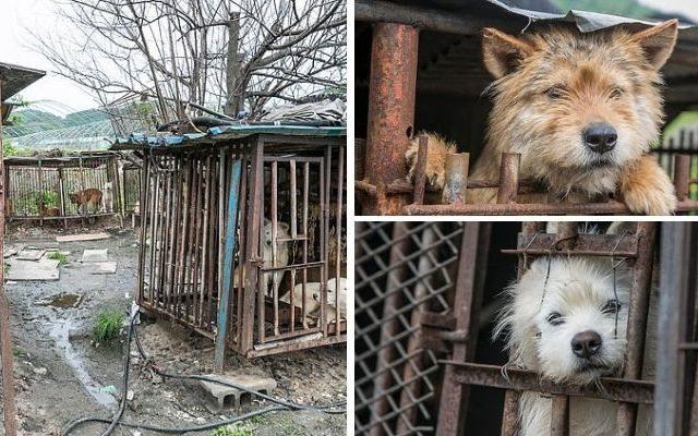 Закрывается один из крупнейших в Южной Корее рынков собачьего мяса