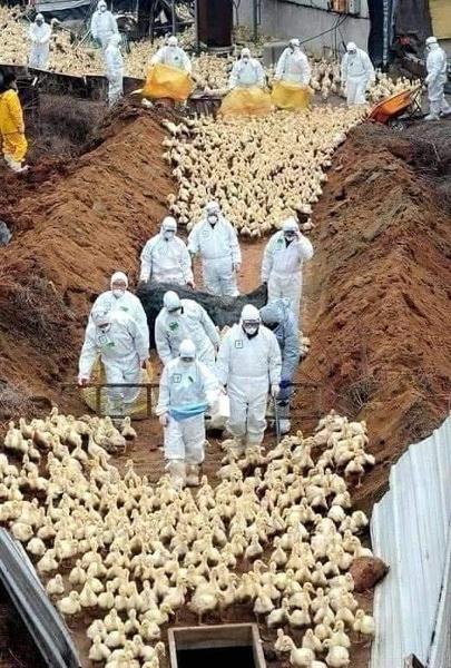 Восстановление мира после пандемии может «нарушить баланс» в природе