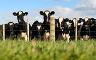 Меньше мяса. Как остановить будущие пандемии
