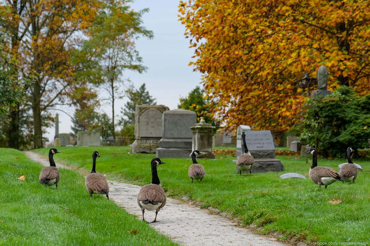 Постоянные резиденты кладбища.