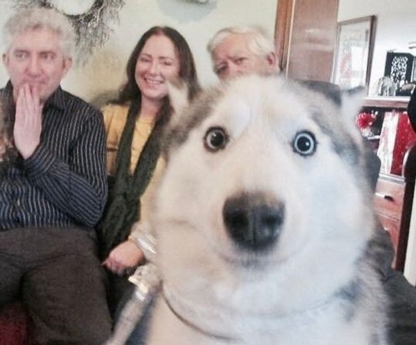10+ фото собак, чей взгляд красноречивее любых слов