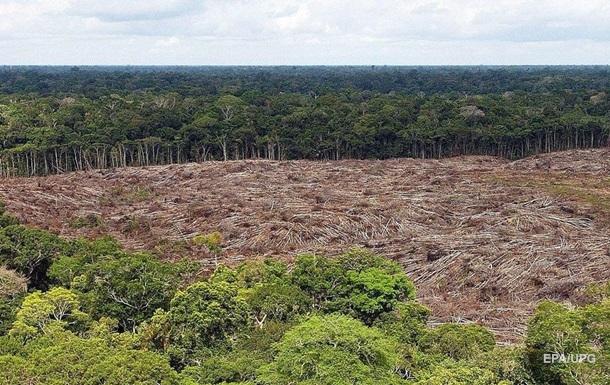 Амазонские леса исчезнут через 43 года – исследование