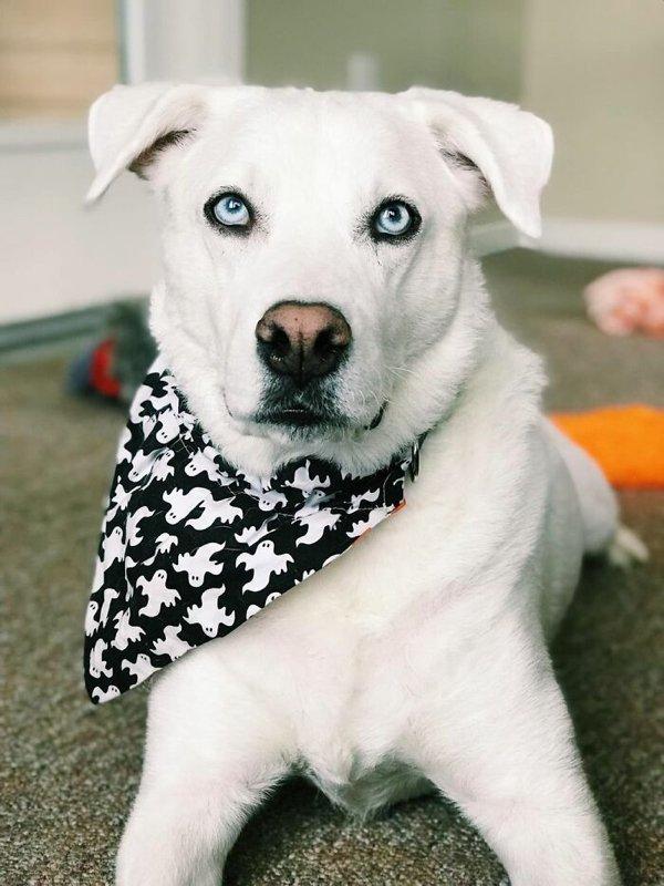 Разрешите влюбиться: 10+ собак, перед чьим взглядом невозможно устоять