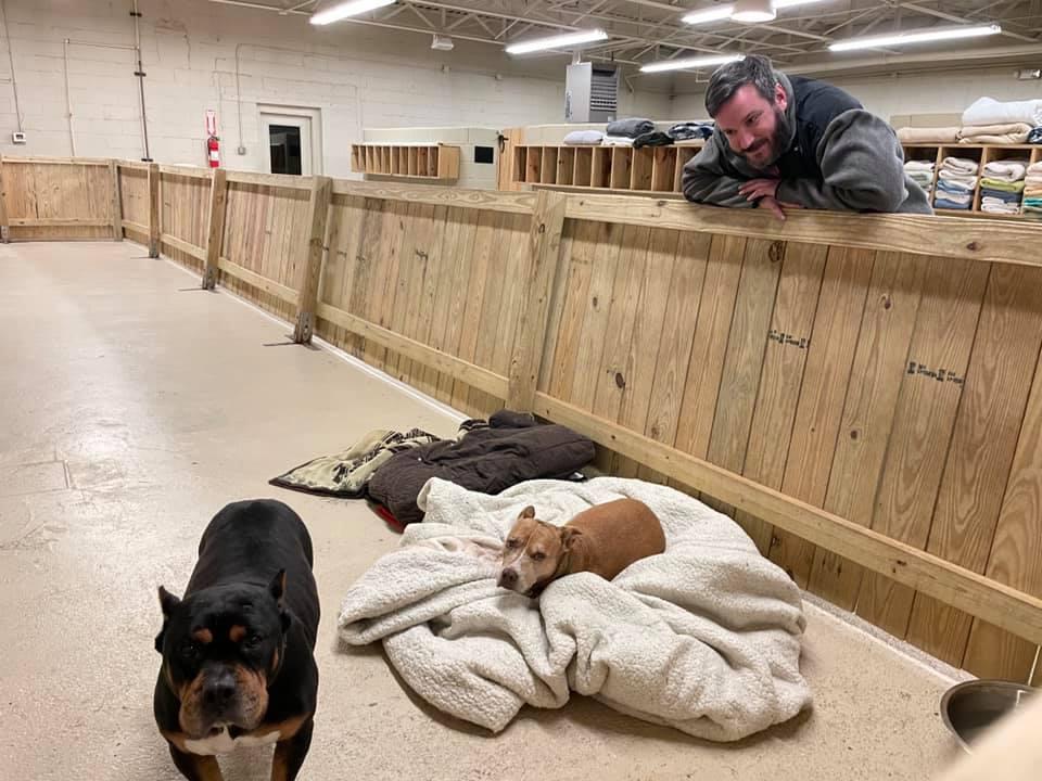 Животные в новом здании приюта.