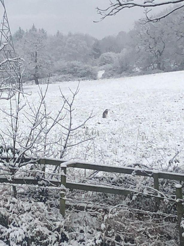 Британку шокировал неожиданный гость в саду. Такие птицы в Англии не гуляют