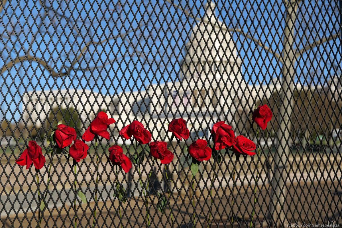 Капитолий и цветы на заборе.
