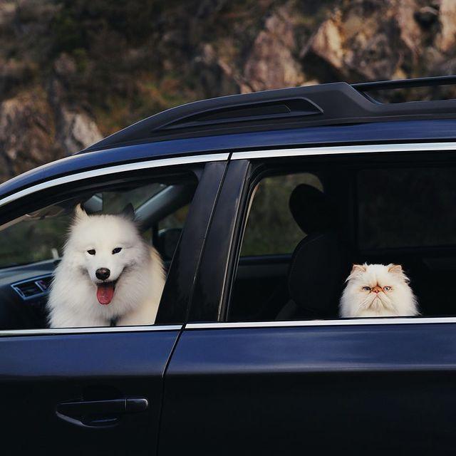 Разные, но вместе: дружба улыбчивого пса и сердитого кота восхитила Сеть