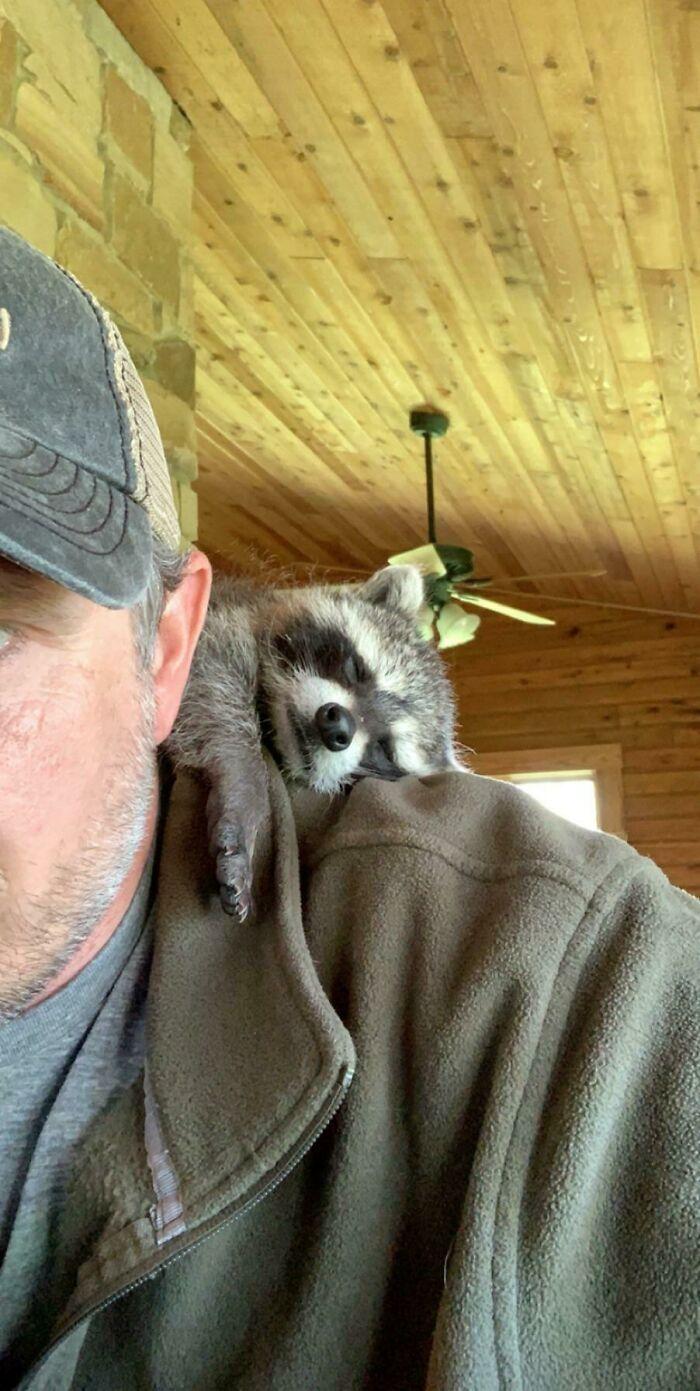 10+ очаровательных животных, которые обожают сидеть на плечах у хозяев