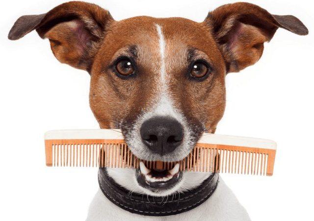 Что может предложить интернет магазин товаров для животных?