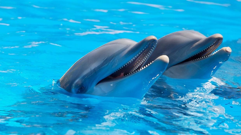 Российские звезды используют дельфинотерапию в Крыму для лечения особенных детей