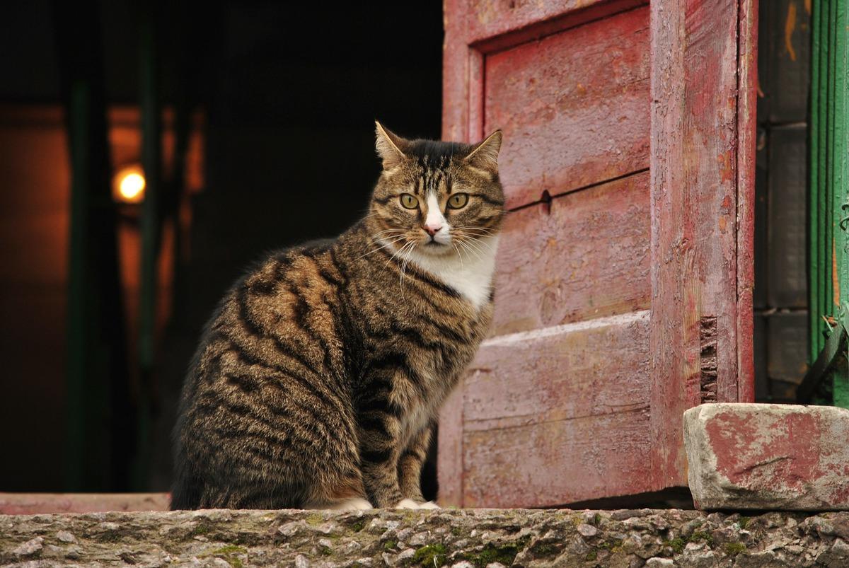 Супруги радовались, что спасли бездомную кошку. Но котейка была с сюрпризом