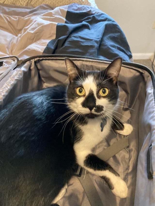 10+ фото кошек, чей взгляд «расскажет», что уних науме