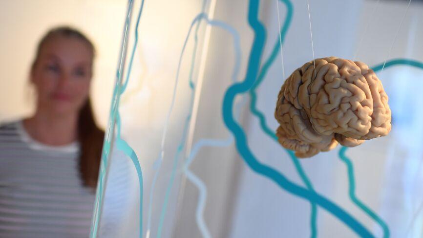 Невролог оценил исследование об уменьшении мозга из-за кофе