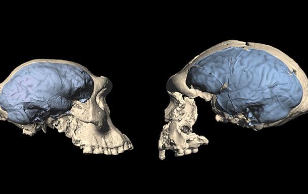 Определена дата формирования современного мозга человека