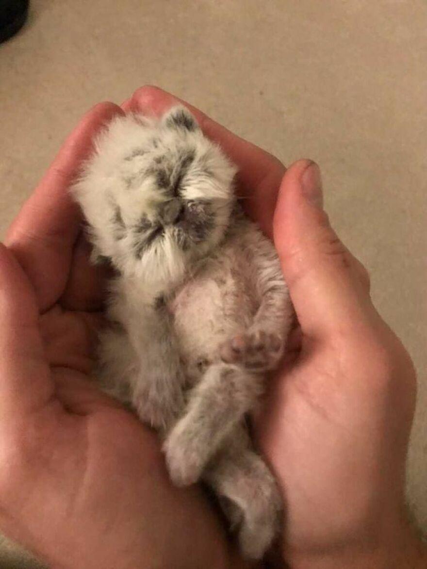 Похожий на дедушку котенок покорил интернет своей необычной внешностью