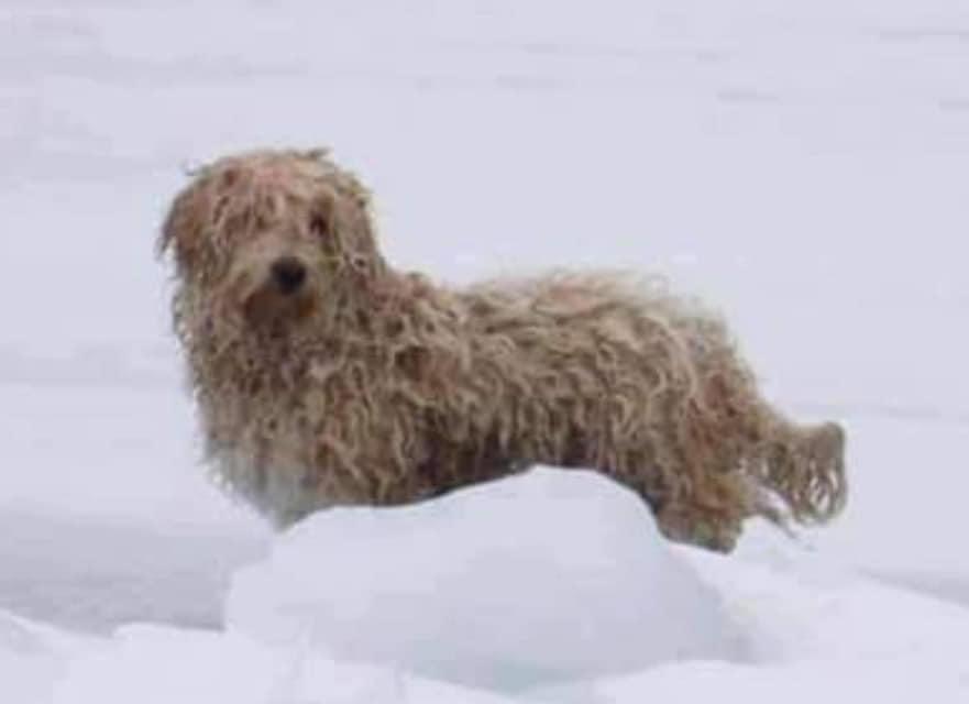 Канадец спас застрявшего на льдине пса и стал его новым хозяином