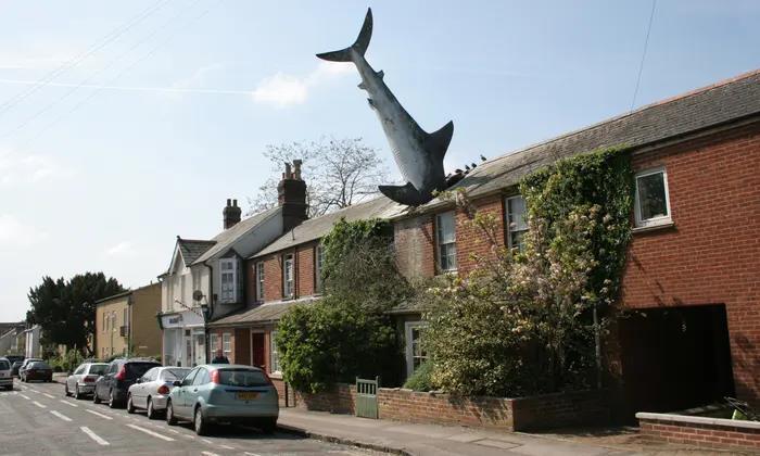 Когда хозяева фанаты акул