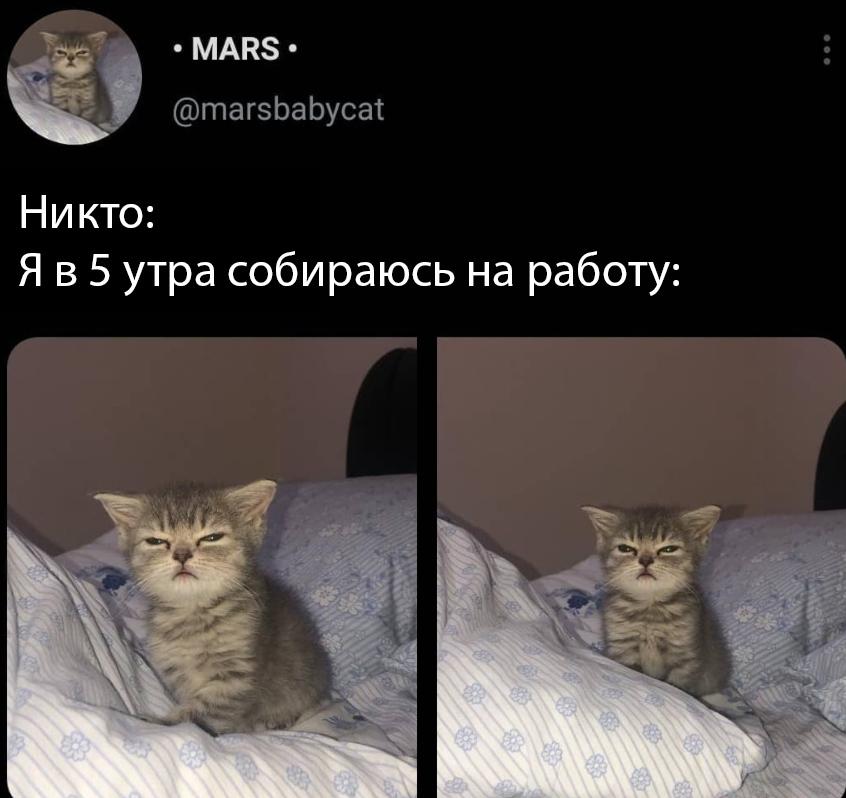 Каждый узнает себя в котике