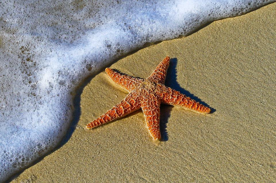 «Звездные кузницы»: в океане обнаружили тяжелые элементы галактики