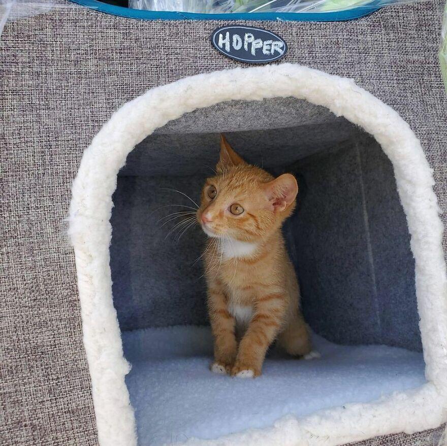 После того как Хоппера немного подлечили, его отправили в приют Noah's Ark Animal Rescue