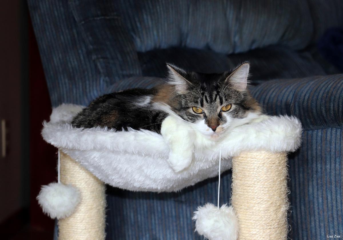 Кошкам очень важно регулярно точить когти