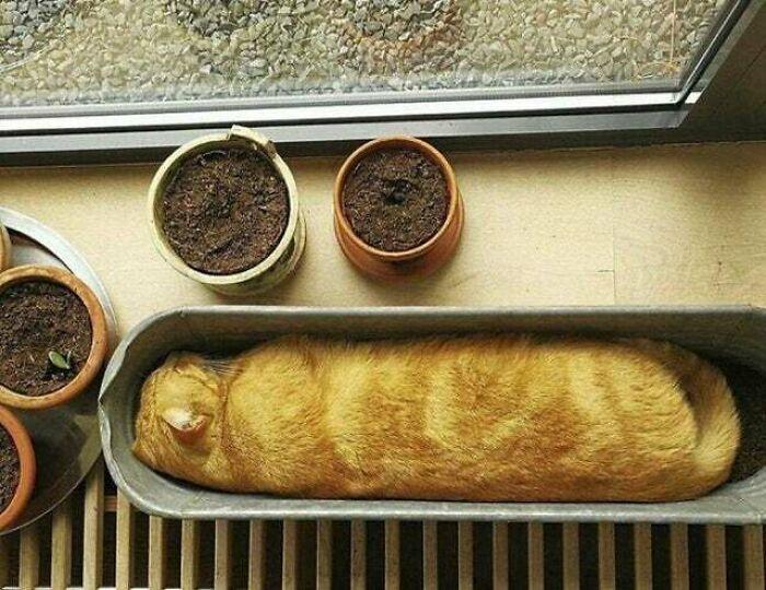 «Кошачий багет»