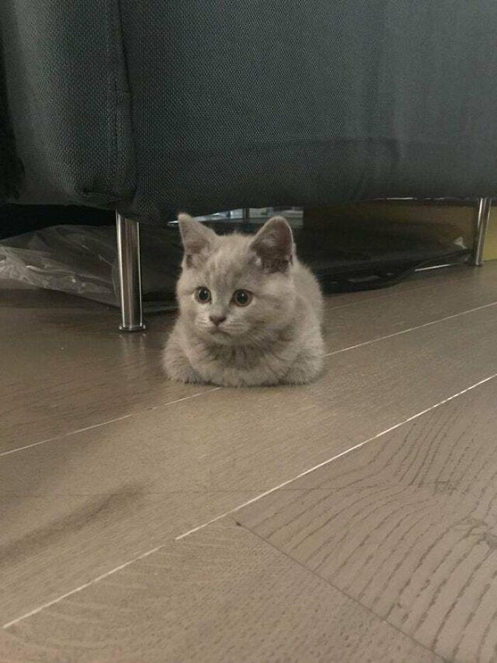 «Мой новый котенок. Принес его домой сегодня»