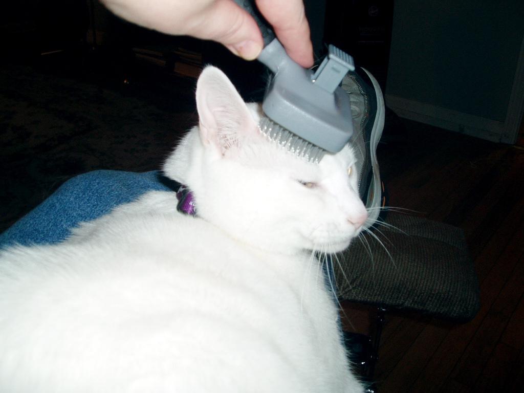 Регулярное расчесывание кошки, особенно во время линьки, не только сократит количество шерсти в доме, но и уменьшит образование шерстяных комков в пищеварительном тракте животного