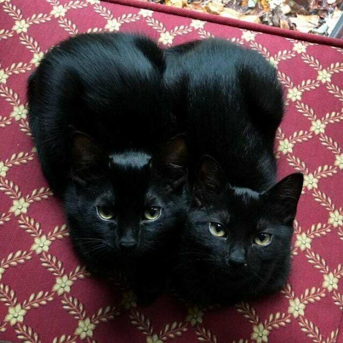«Двойной кошачий хлеб»