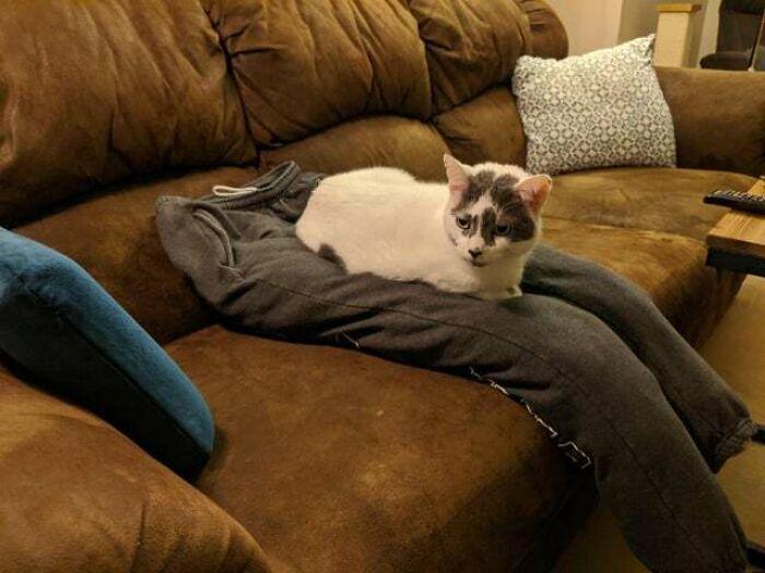 «Моя девушка сделала для кота фальшивые колени, чтобы он не отвлекал ее от работы»