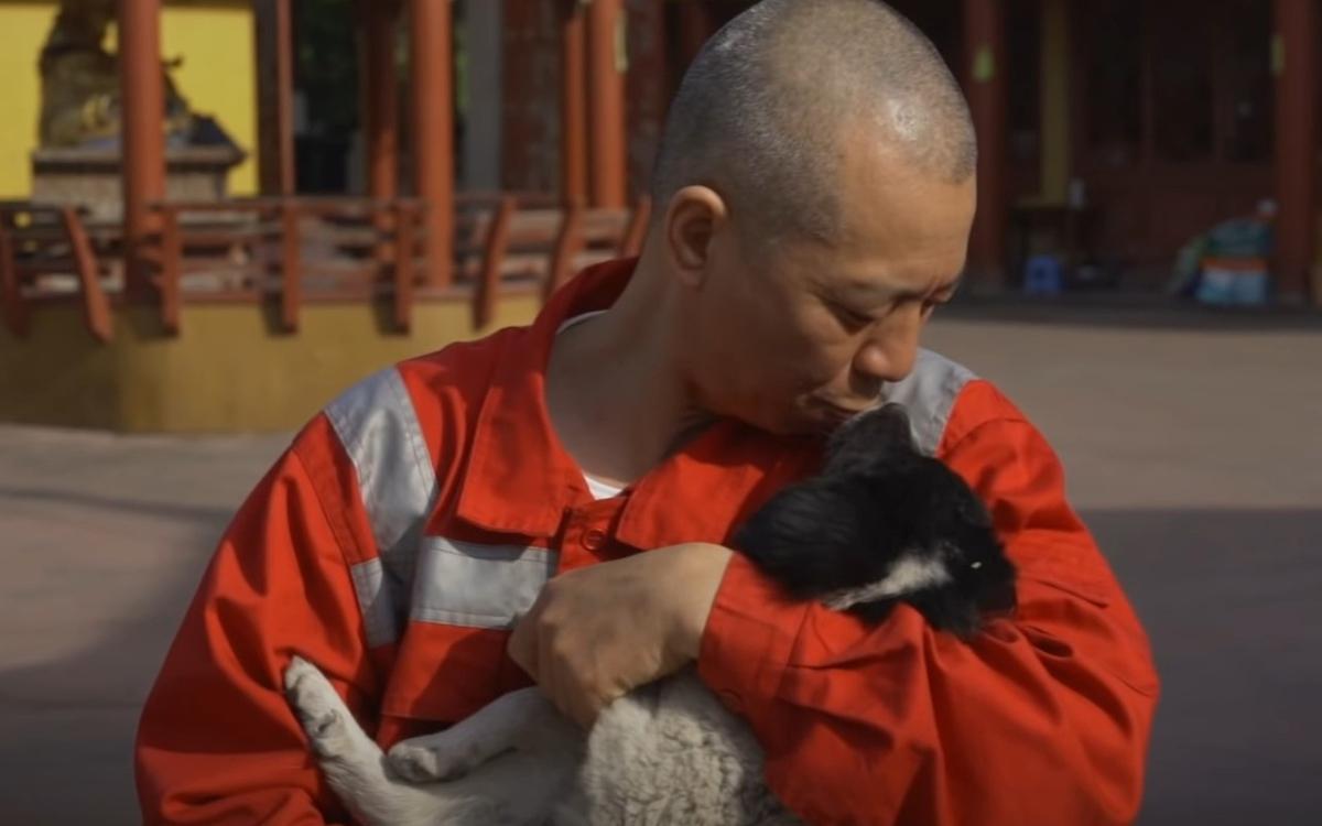 Монах заметил, что на улицах гораздо больше бездомных собак, чем кошек, поэтому он стал уделять их спасению почти все свое время