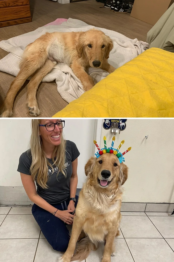 «В прошлом году мы принесли домой этого больного щенка».