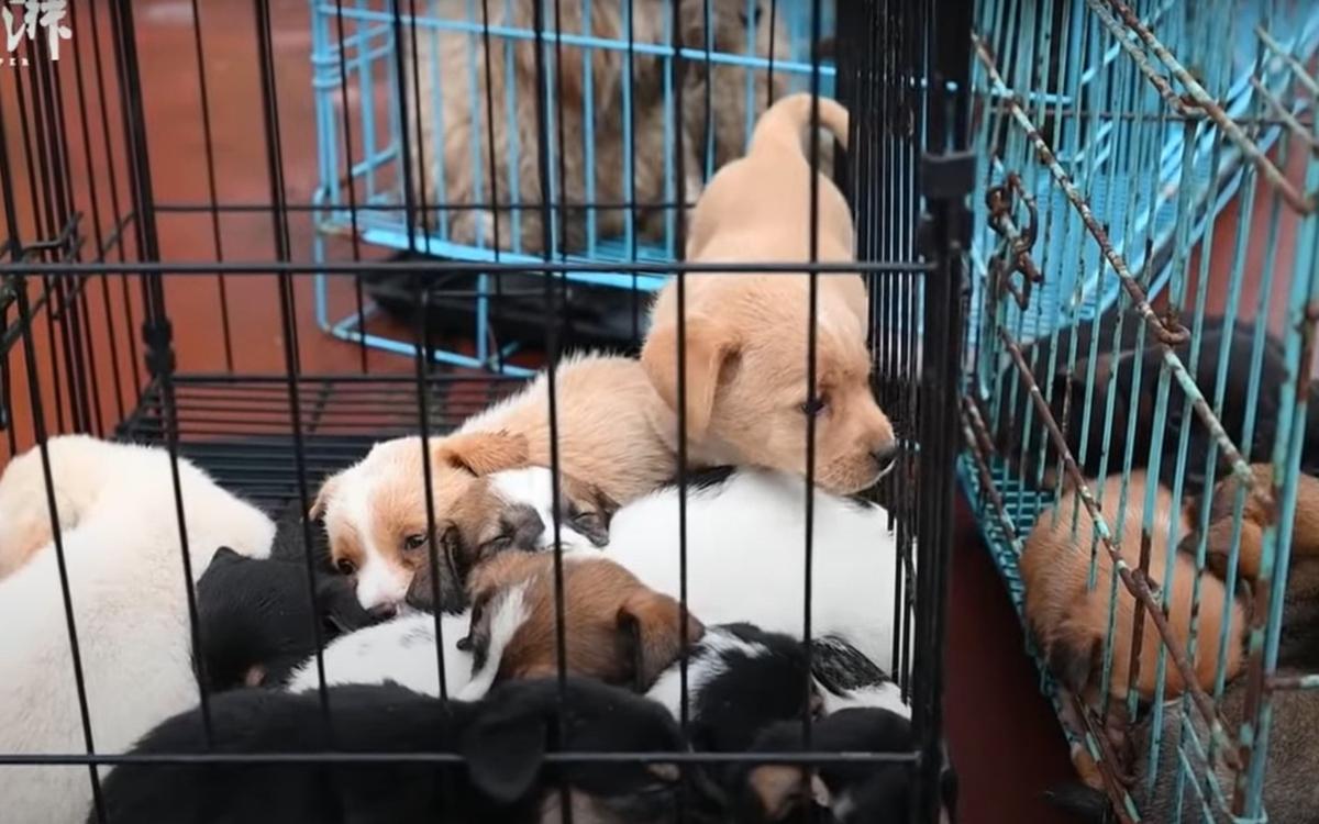 За 27 лет монах спас десятки тысяч собак