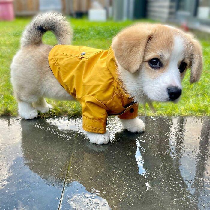 «Дождь, уходи».
