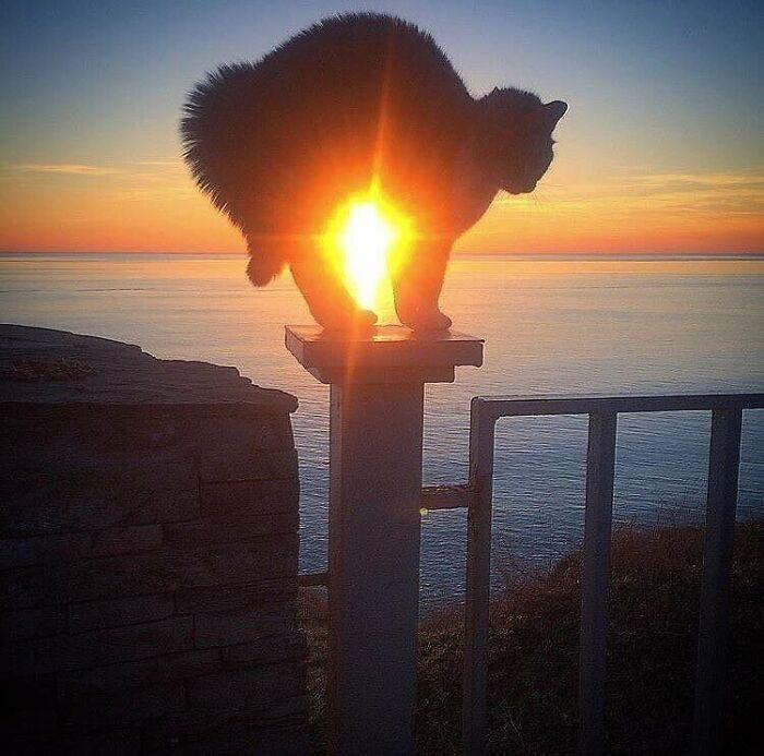 Солнечный кот.